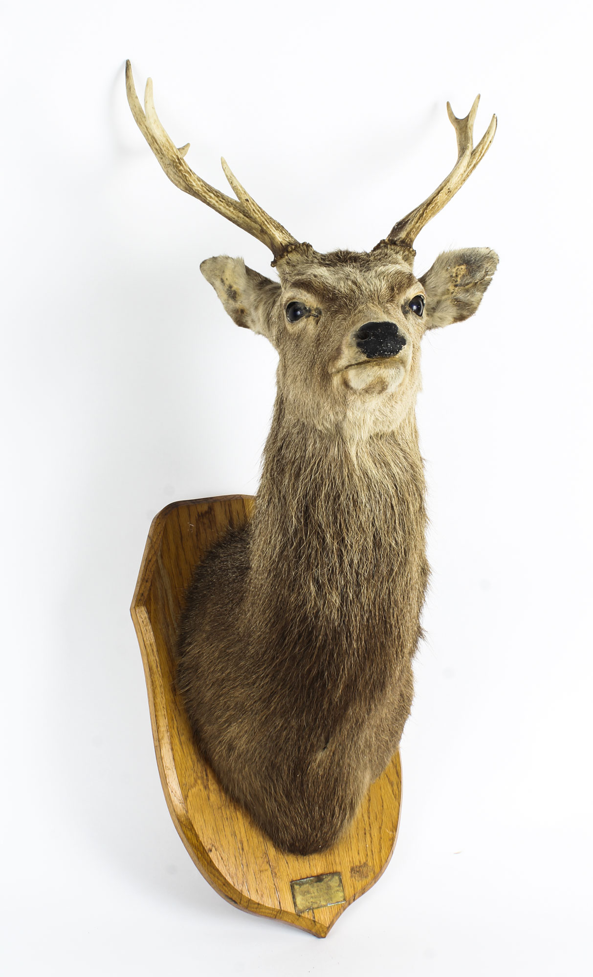 Dating Taxidermy